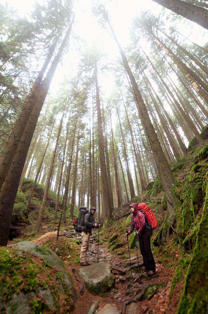 trekking in the forrest