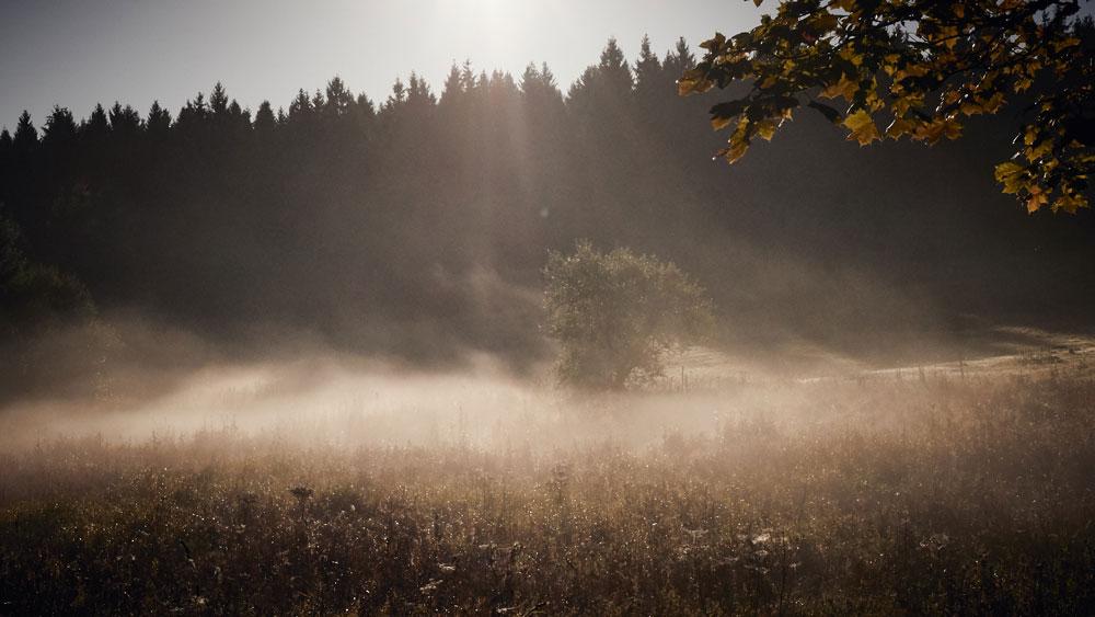 Harz_impressions11