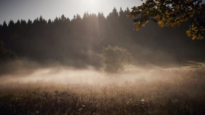 Harz Witches' Trail autumn at its best